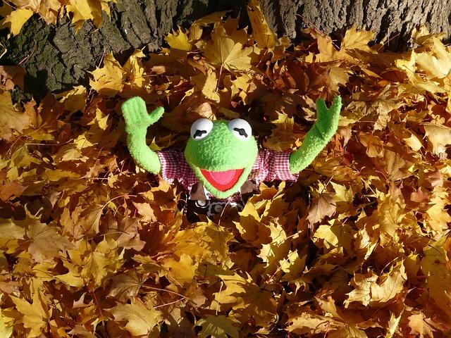 枯れ葉に埋まるカエル